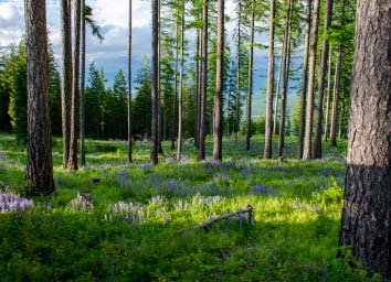 see the land available in NW Montana